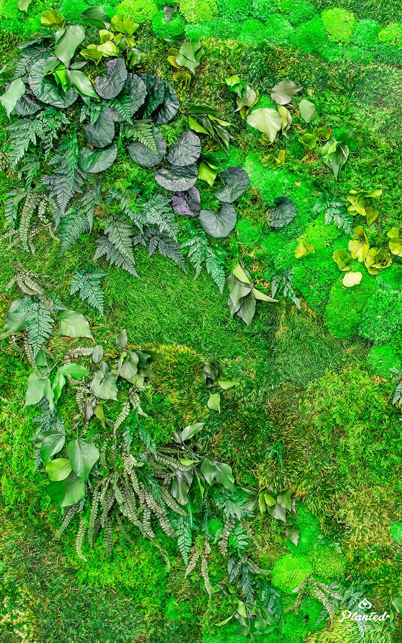 PlantedDesign_Swarm_Living_Moss_Walls_Reception_Lobby_Santa_Clara_California_07.jpg