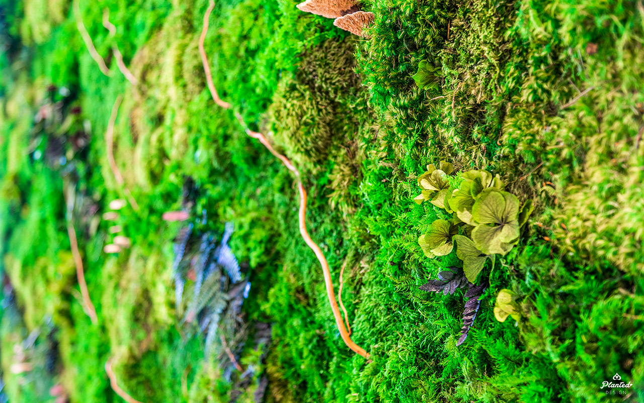 PlantedDesign_Hitachi_Living_Moss_Mushrooms_Plants_Walls_Reception_Lobby_Santa_Clara_California_11.jpg