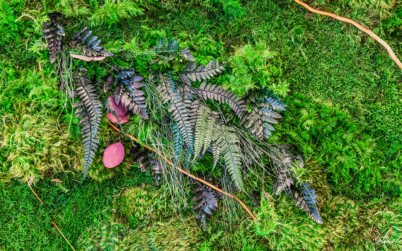 PlantedDesign_Hitachi_Living_Moss_Mushrooms_Plants_Walls_Reception_Lobby_Santa_Clara_California_14.jpg