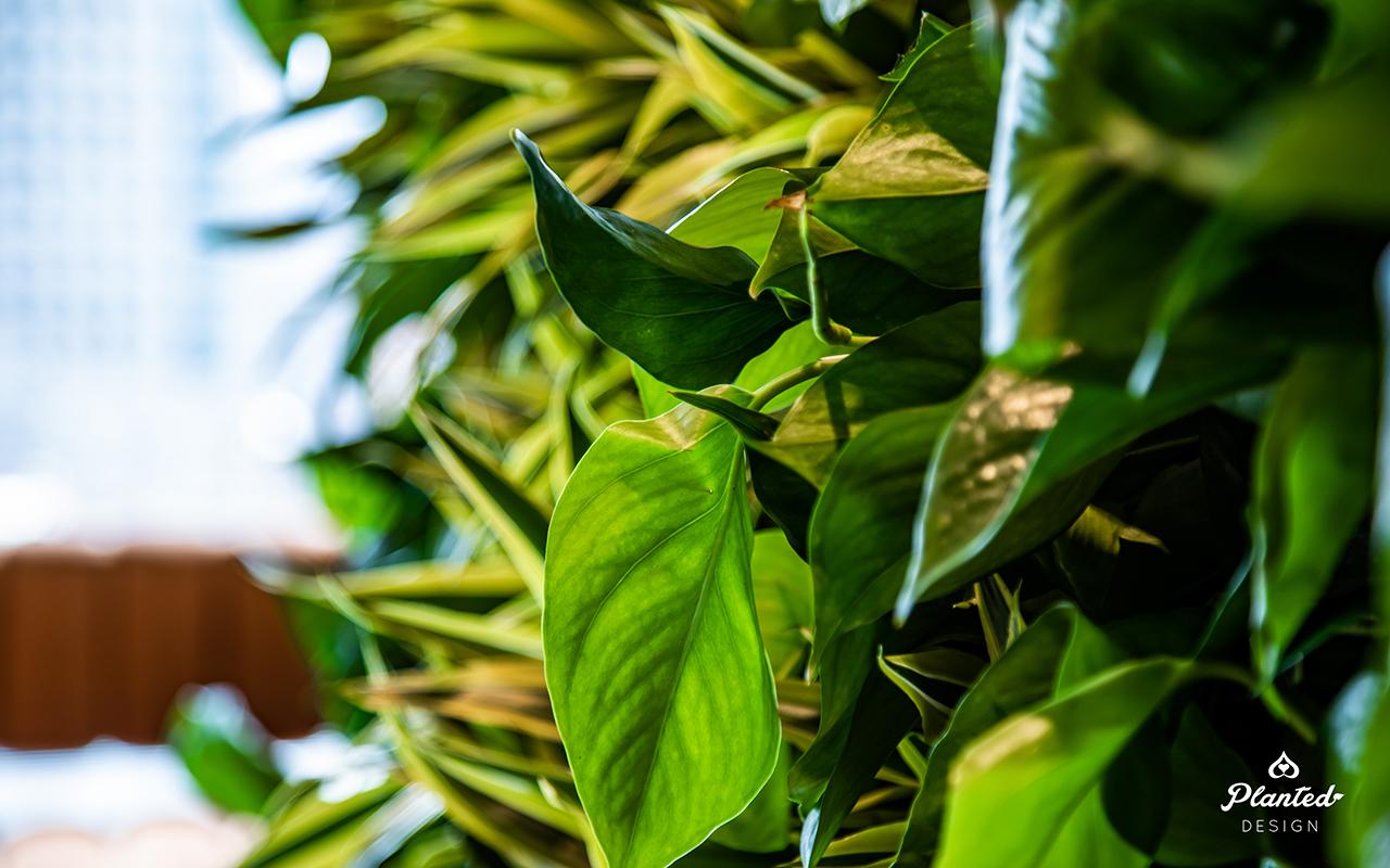 PlantedDesign_Living Wall_VerticalGarden_Synapsefi_SanFrancisco_California00088.jpg