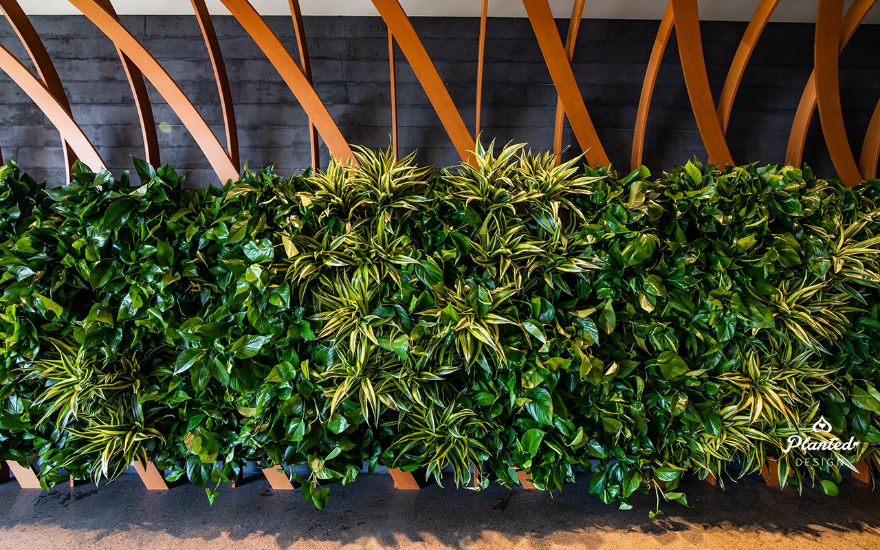 PlantedDesign_Living Wall_VerticalGarden_Synapsefi_SanFrancisco_California00086.jpg
