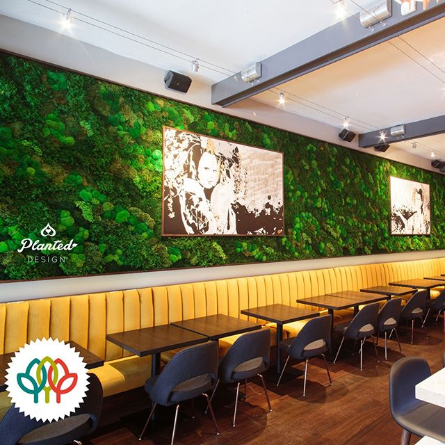 Our Kaiyo moss wall won a Platinum International Plantscape Award in the Silk, Replica and Preserved category.