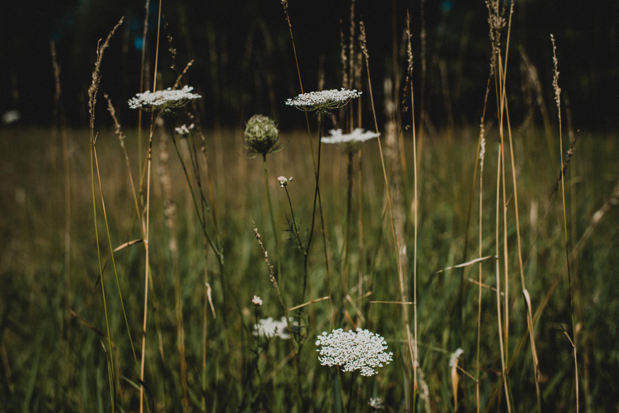 Intimate-Backyard-Farmhouse-Ohio-Wedding-Andi+Ben_Mallory+Justin-Photographers.JPG