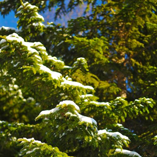 haystack winter  5879.jpg