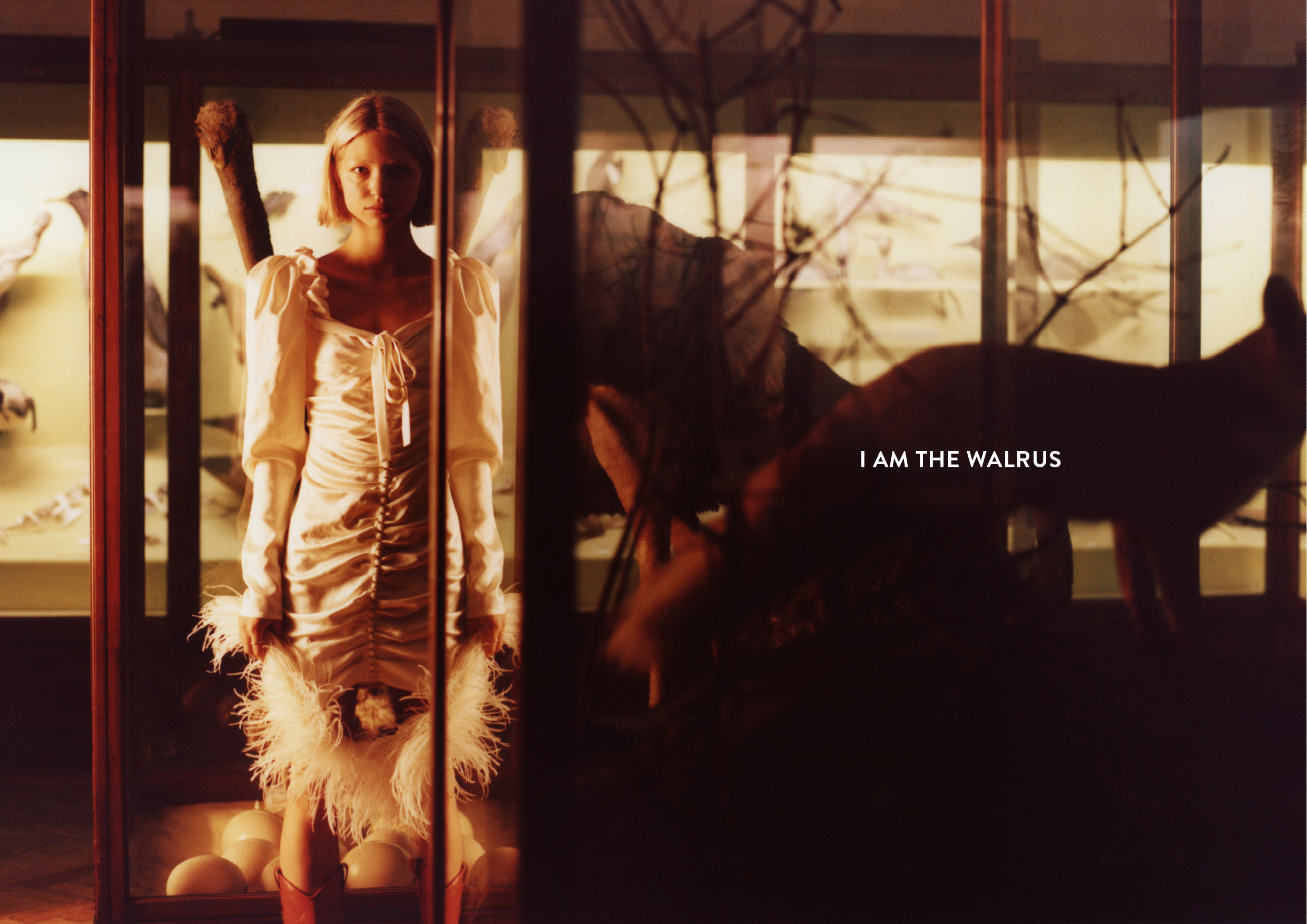 WALRUS_01.jpg