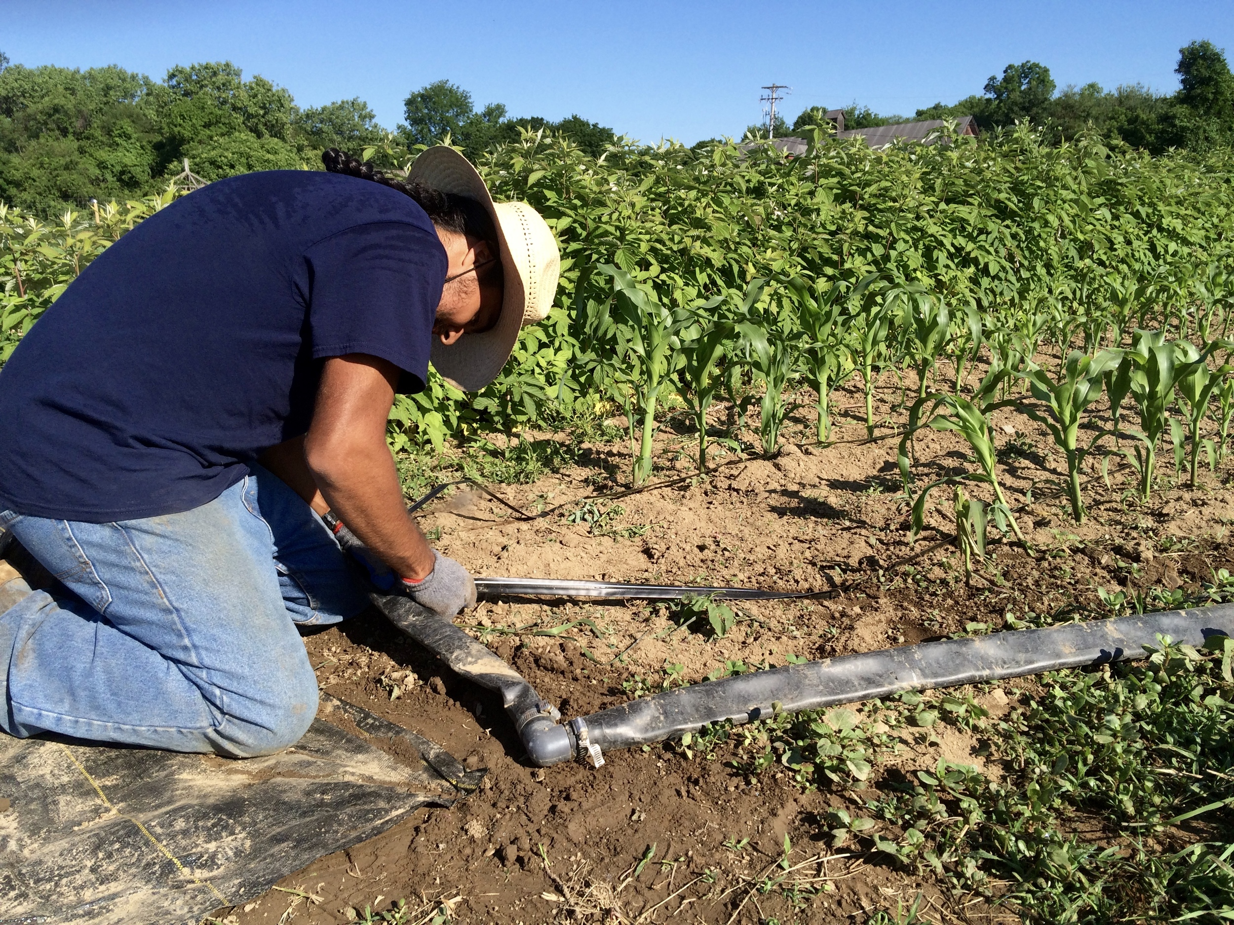 German is connecting a drip line to the header, which supplies water.