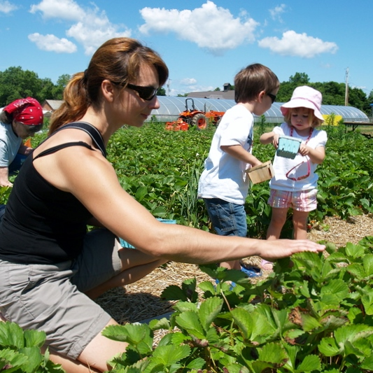 family picking strawberries.jpg