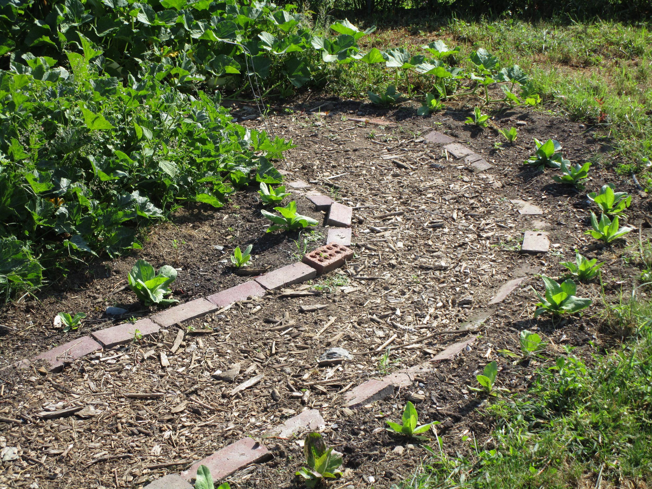 Ellie kids garden.jpg