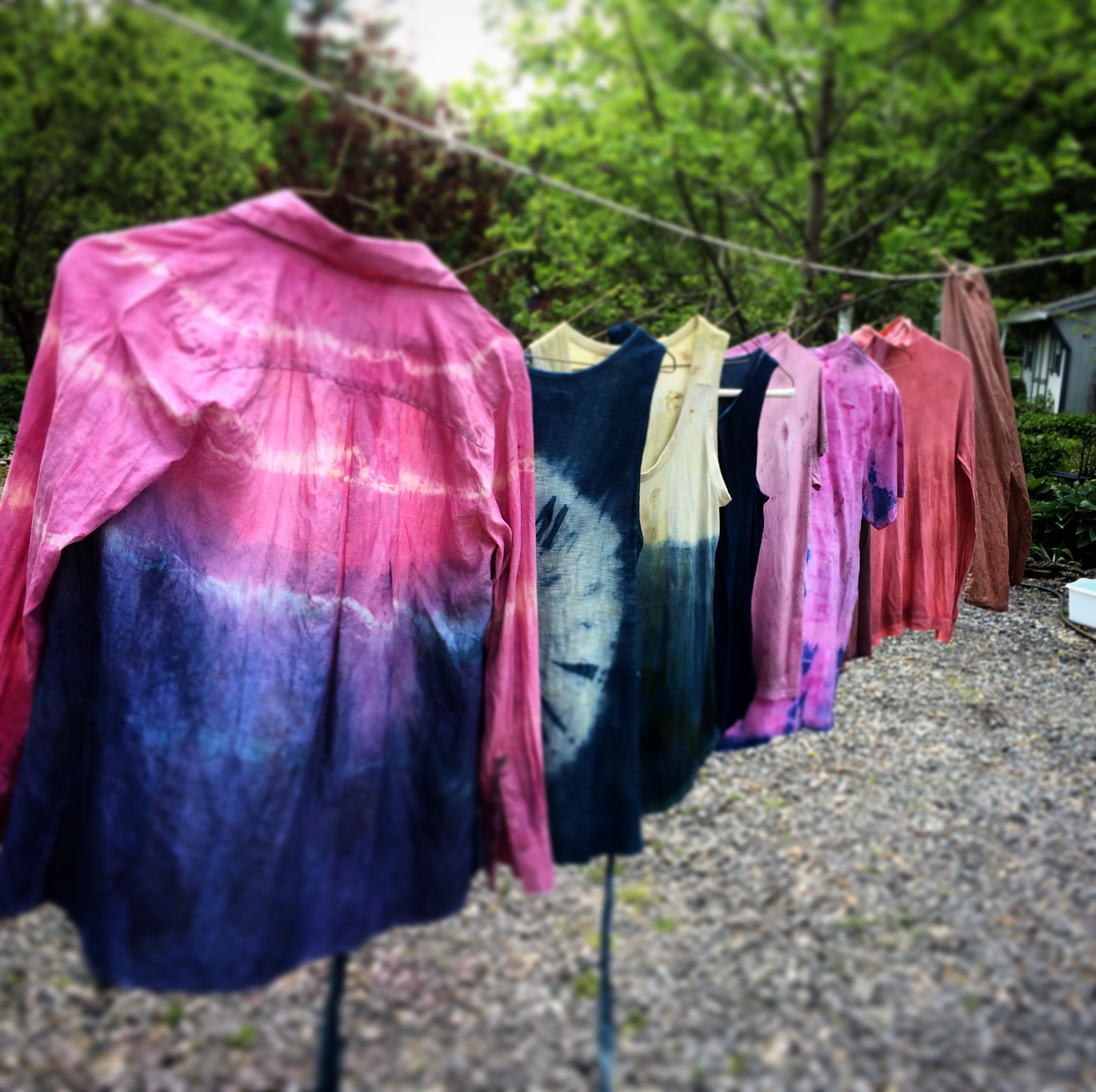 Plant-Based Dyeing Activity