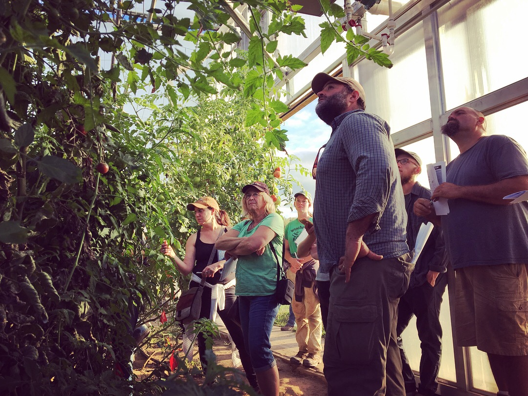 NOFA attendees reflect on tomato trellising methods