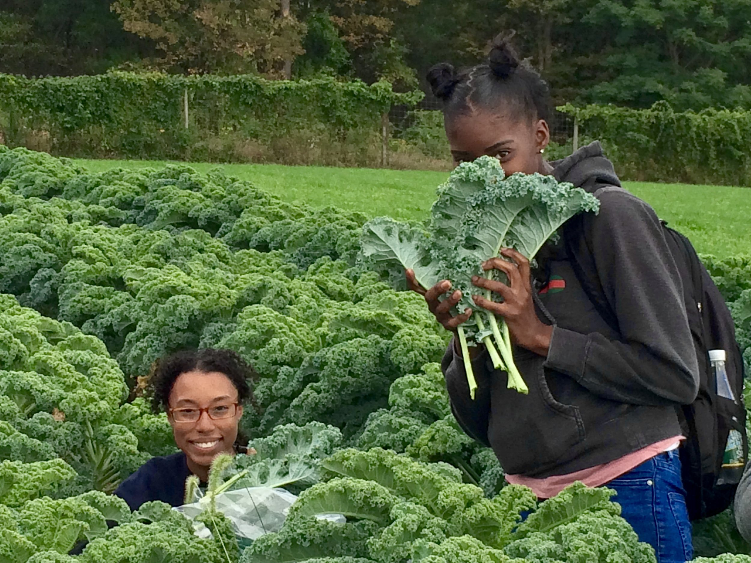 Alyssa and Rodnisha glean kale for Feeding the Hudson Valley.
