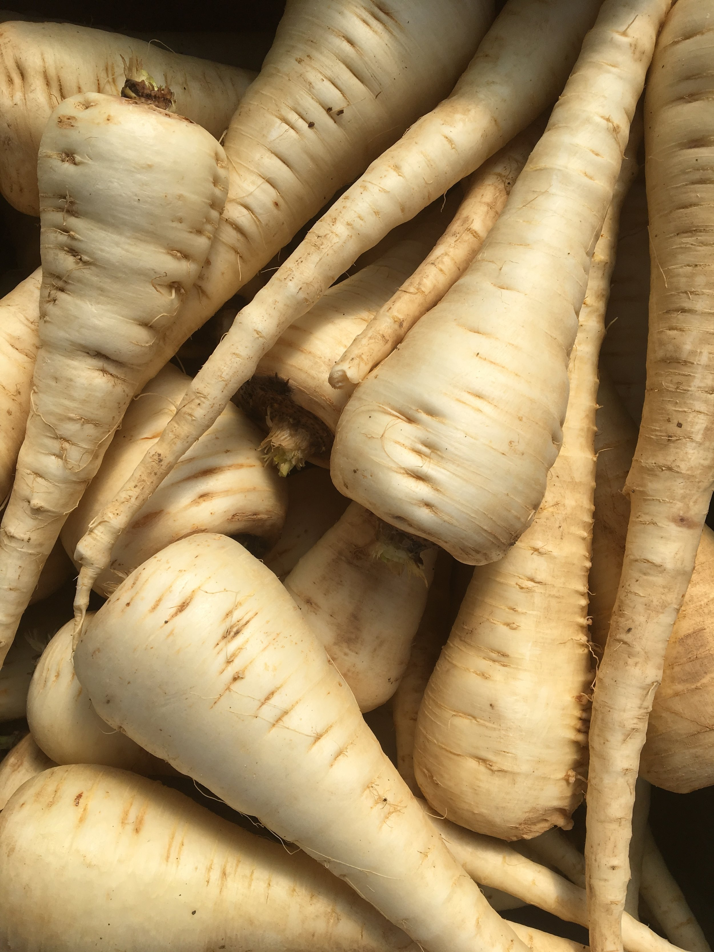 Spring-dug parsnips are candy sweet
