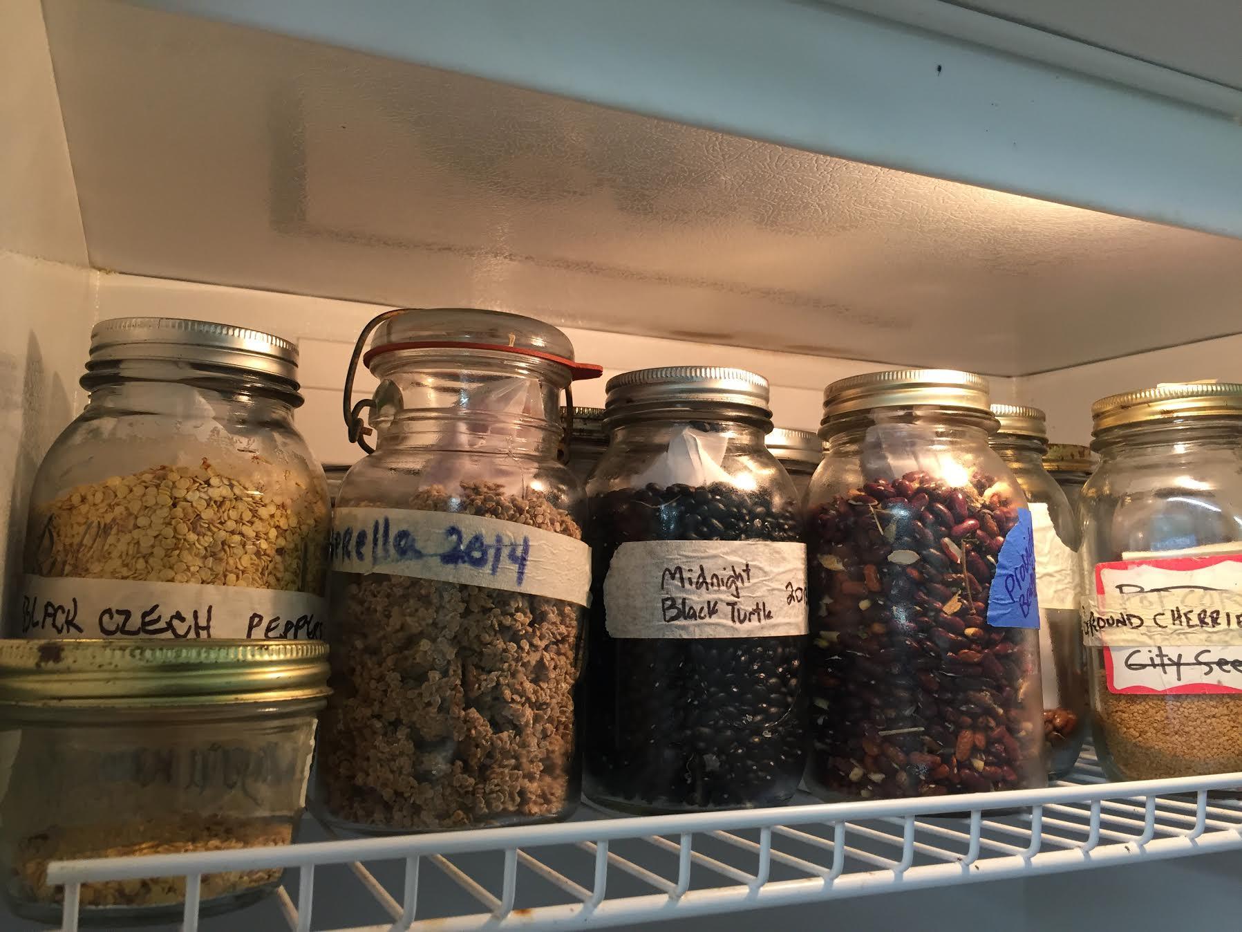 seed saving 5.jpeg