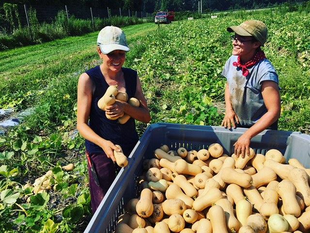 Lauren and Laura harvesting 7,023 butternut squash