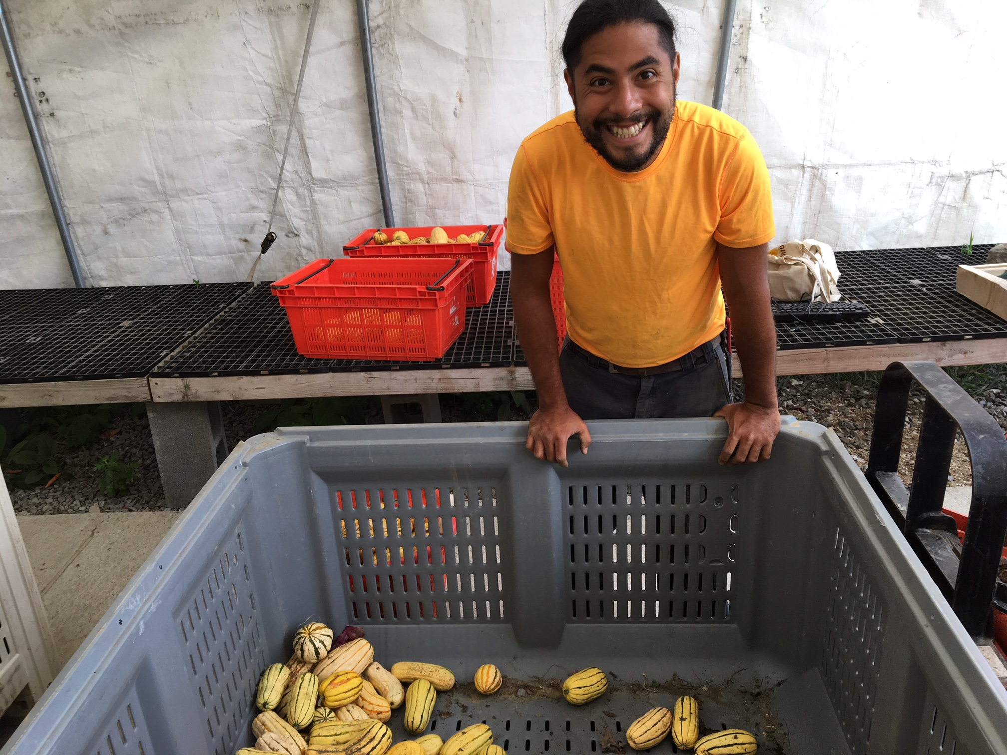 German getting delicata ready for distribution