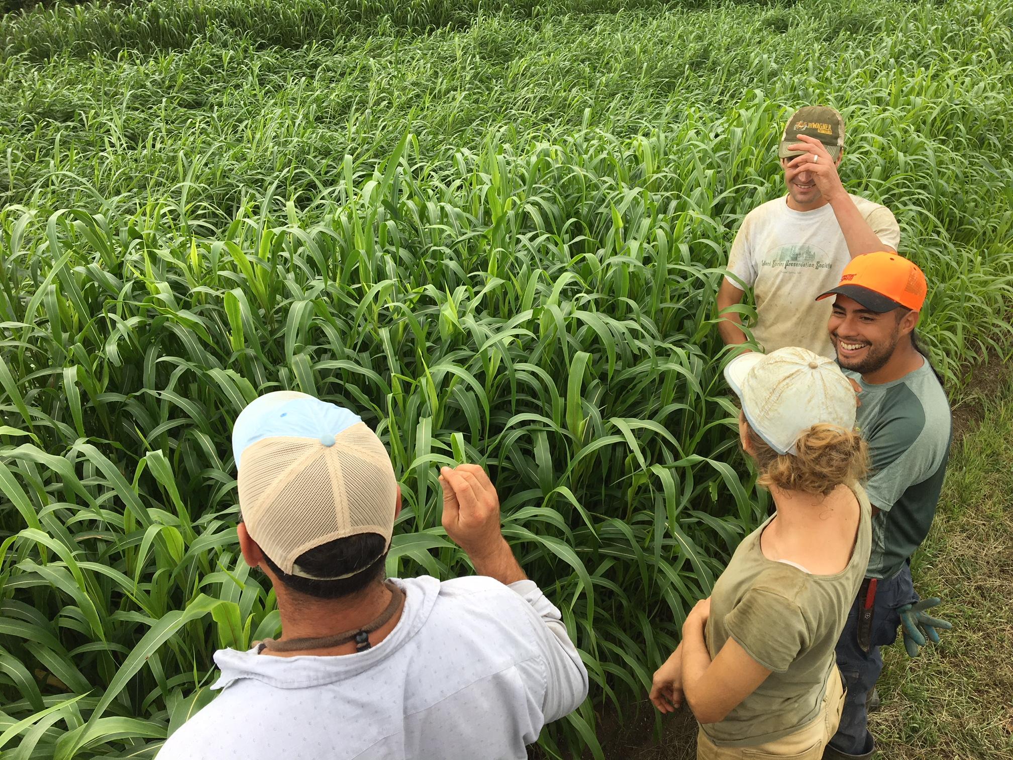 The farm team surveying the sudan grass