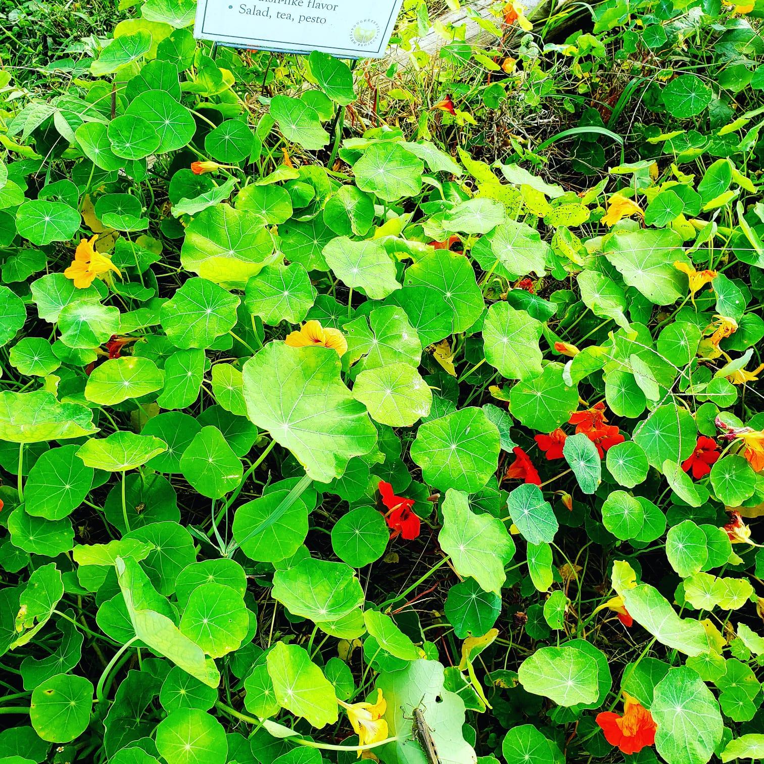 herb 10.jpg