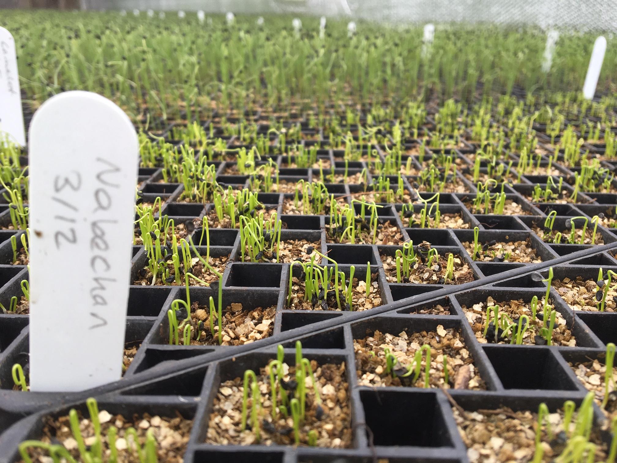 growers 2.JPG