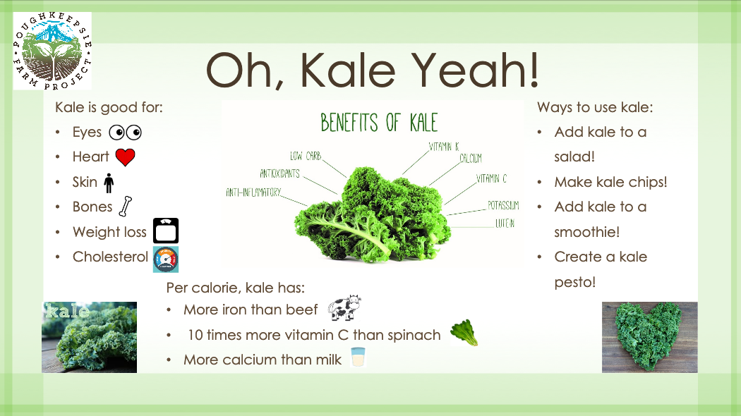 Oh, Kale Yeah! – Benefits of Kale - It seems impossible that one food could have so many benefits, that's why we call kale a superfood. Not only is it nutrient rich, it's delicious too! Try some of our suggested recipes to add kale to your diet!