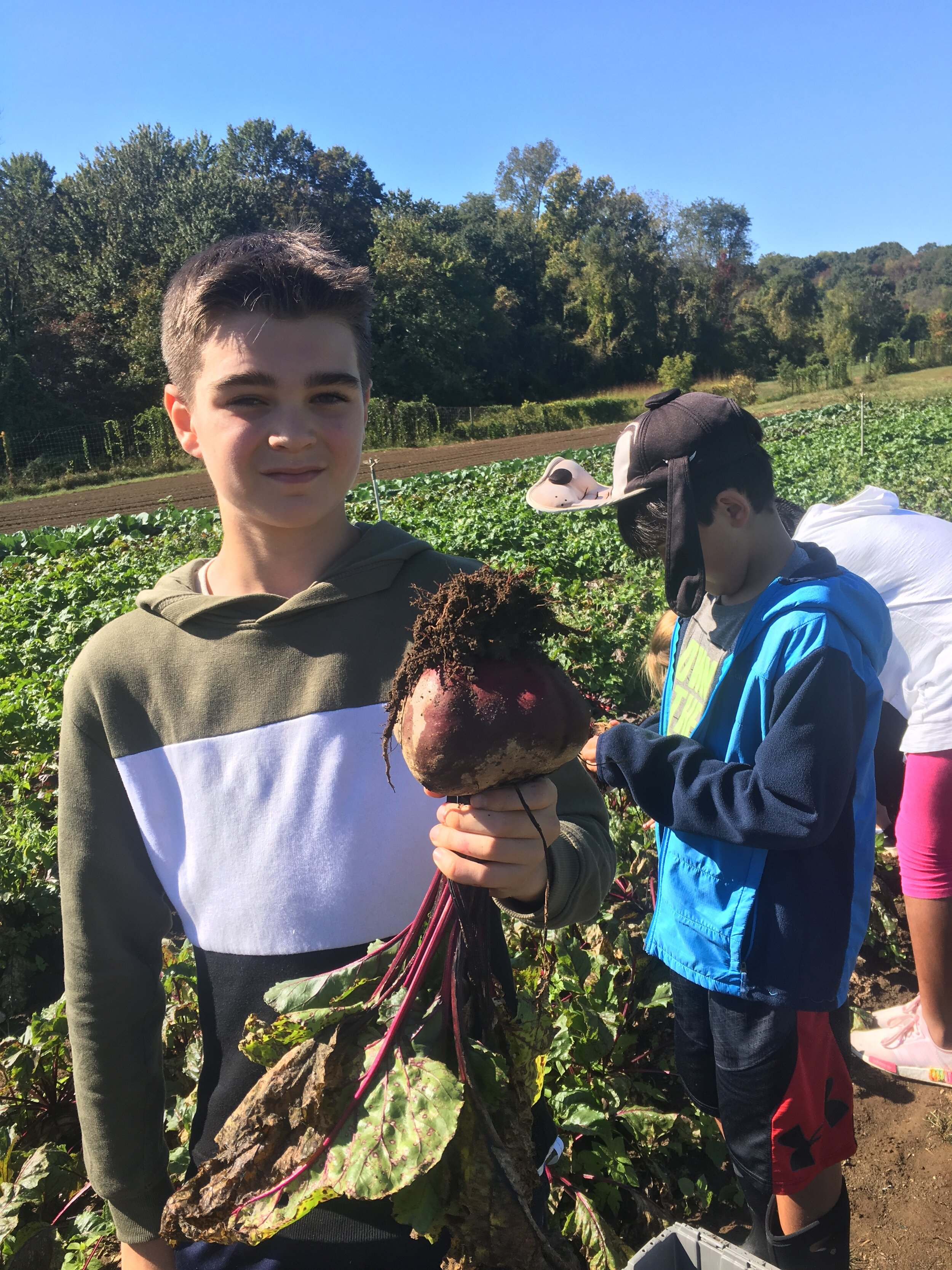 Students from PDS harvest big beets
