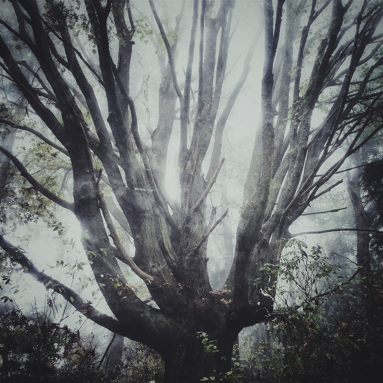 Discovery_Tree_WHCC.jpg