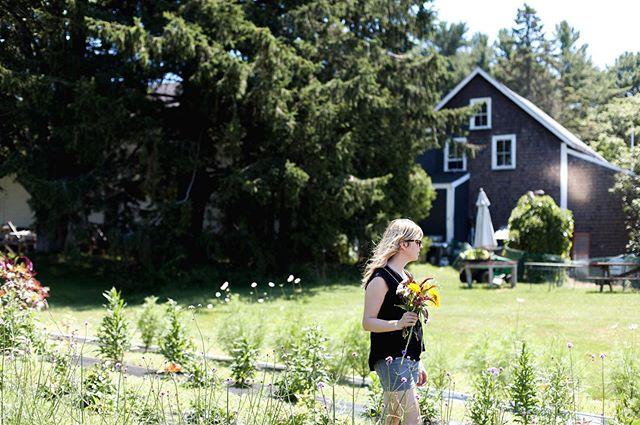 Maine   flower farm 🌻