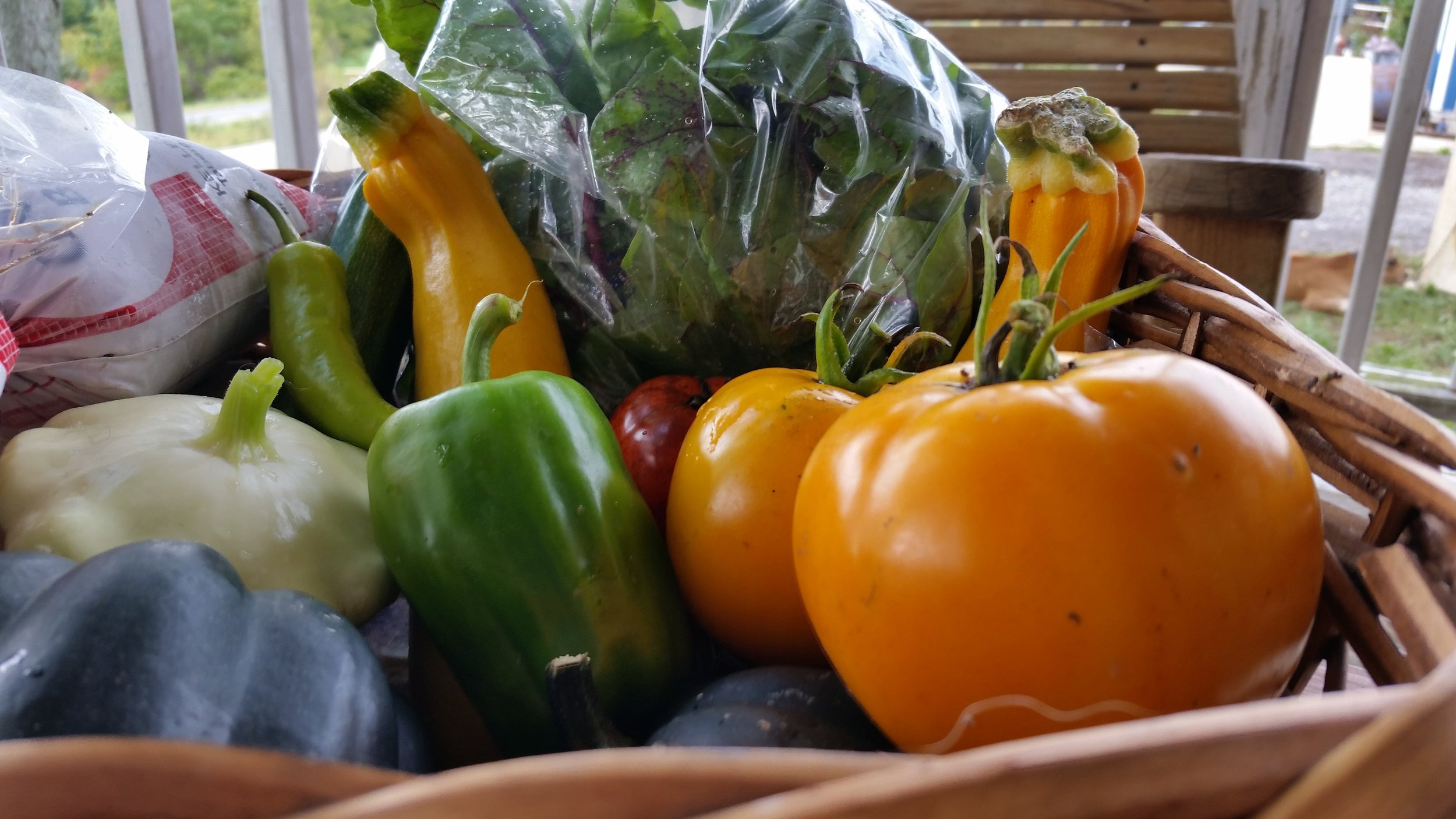 Green Peppers, Hot Peppers, Tomatoes, Acorn Squash, Leafy Greens, Summer Squash, Ground Beef, and a Porterhouse Steak fill this mid-September basket.