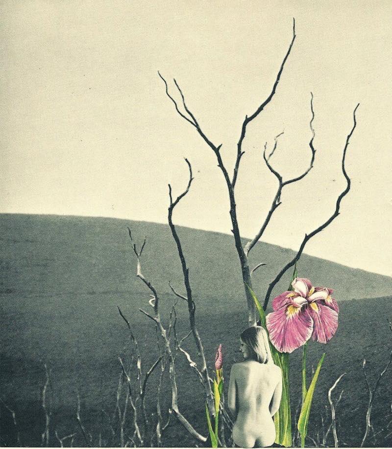 Collage: Mary Herrera