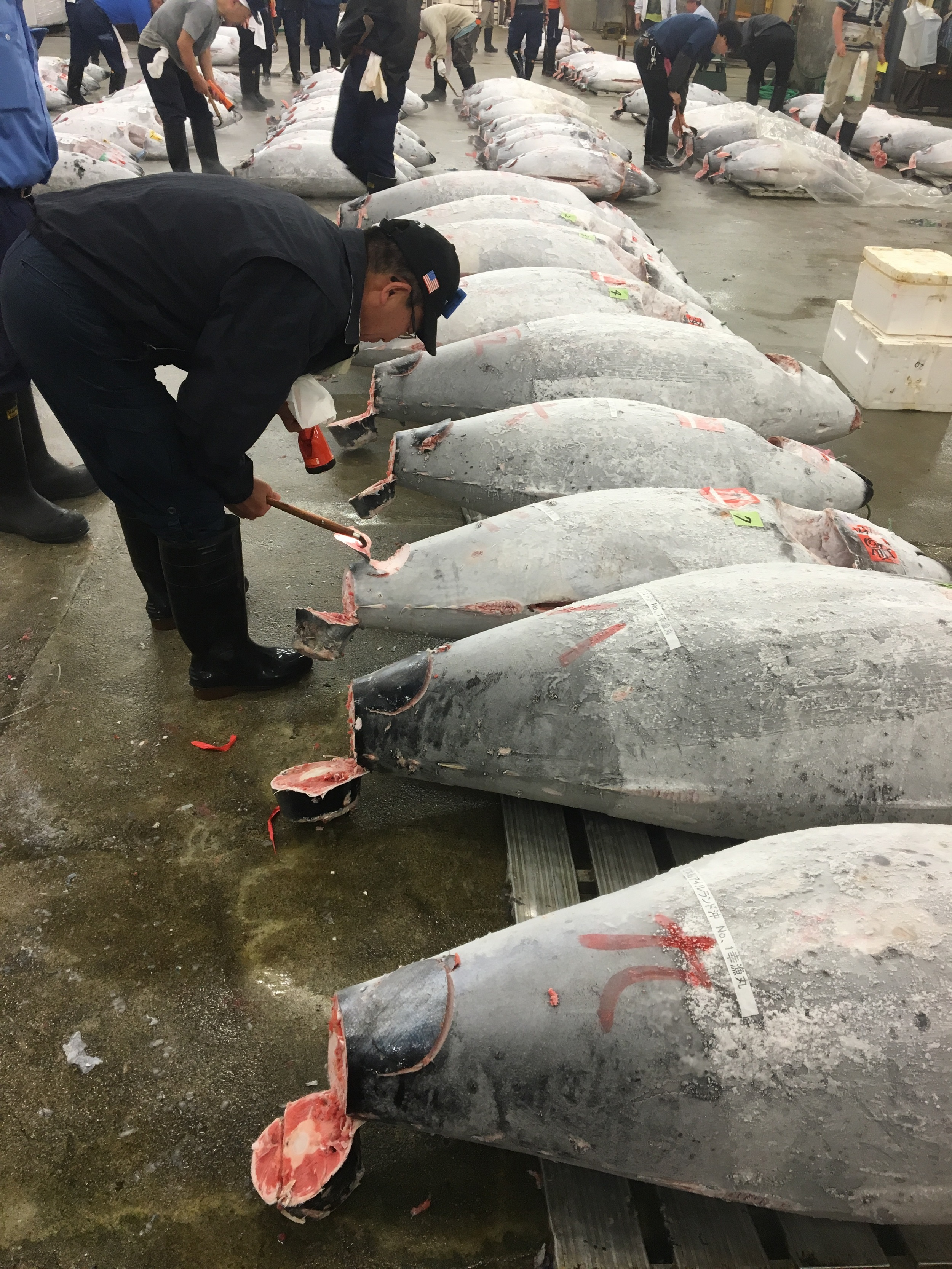 Tuna inspection before the auction at the Tsukiji Fish Market