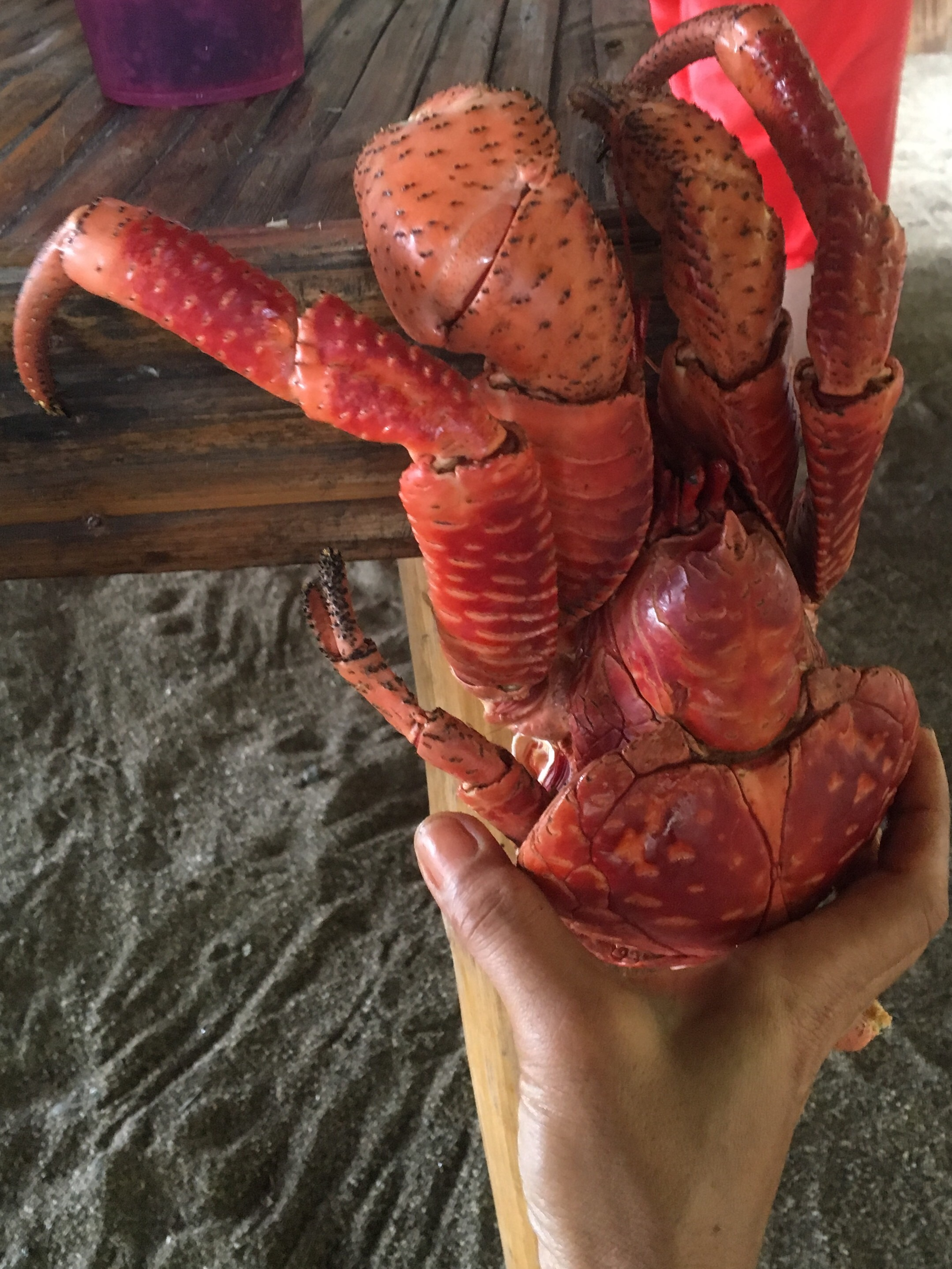 Coconut crab