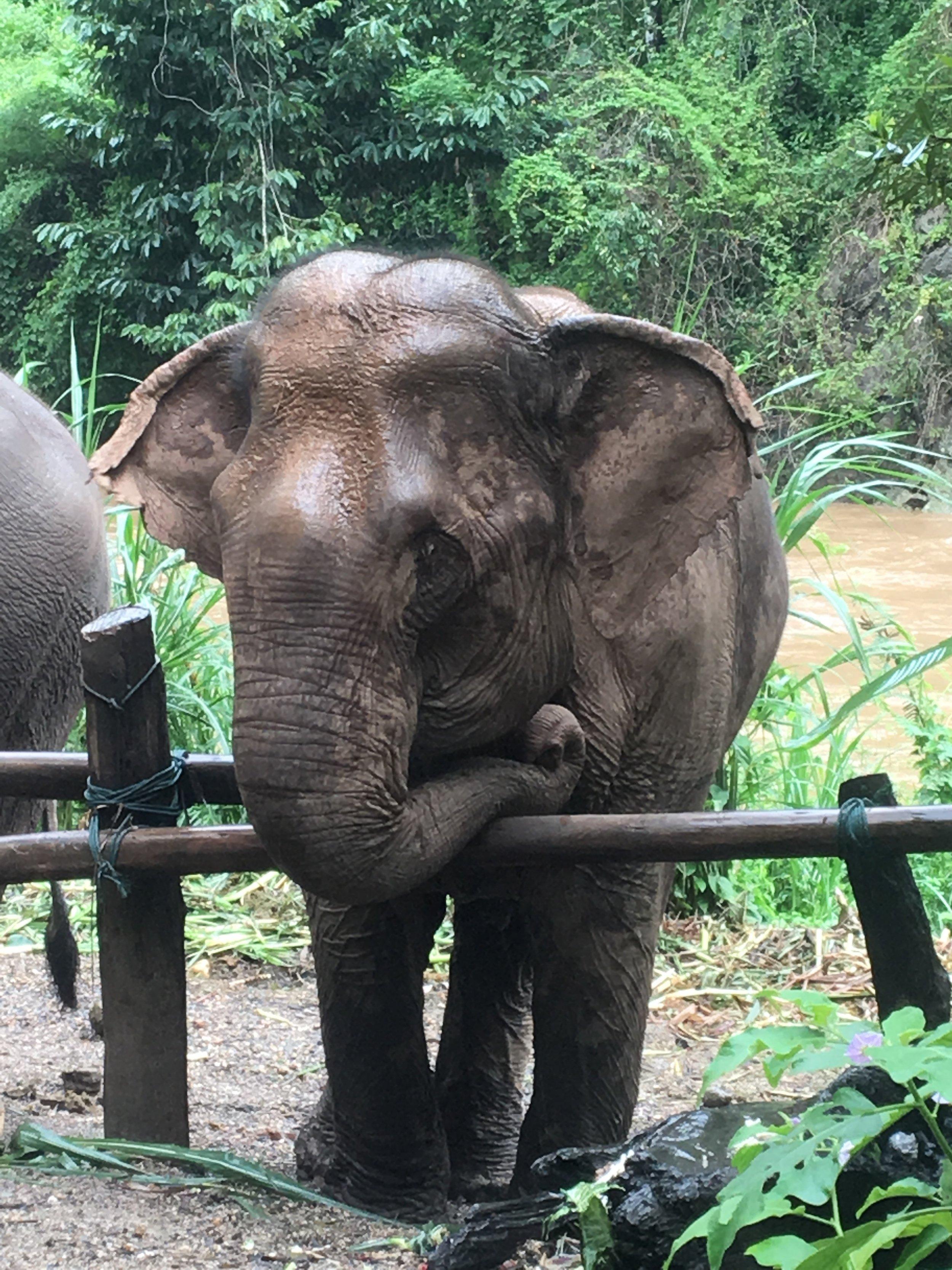 Elephant with an attitude.