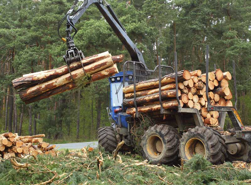 trees for timber