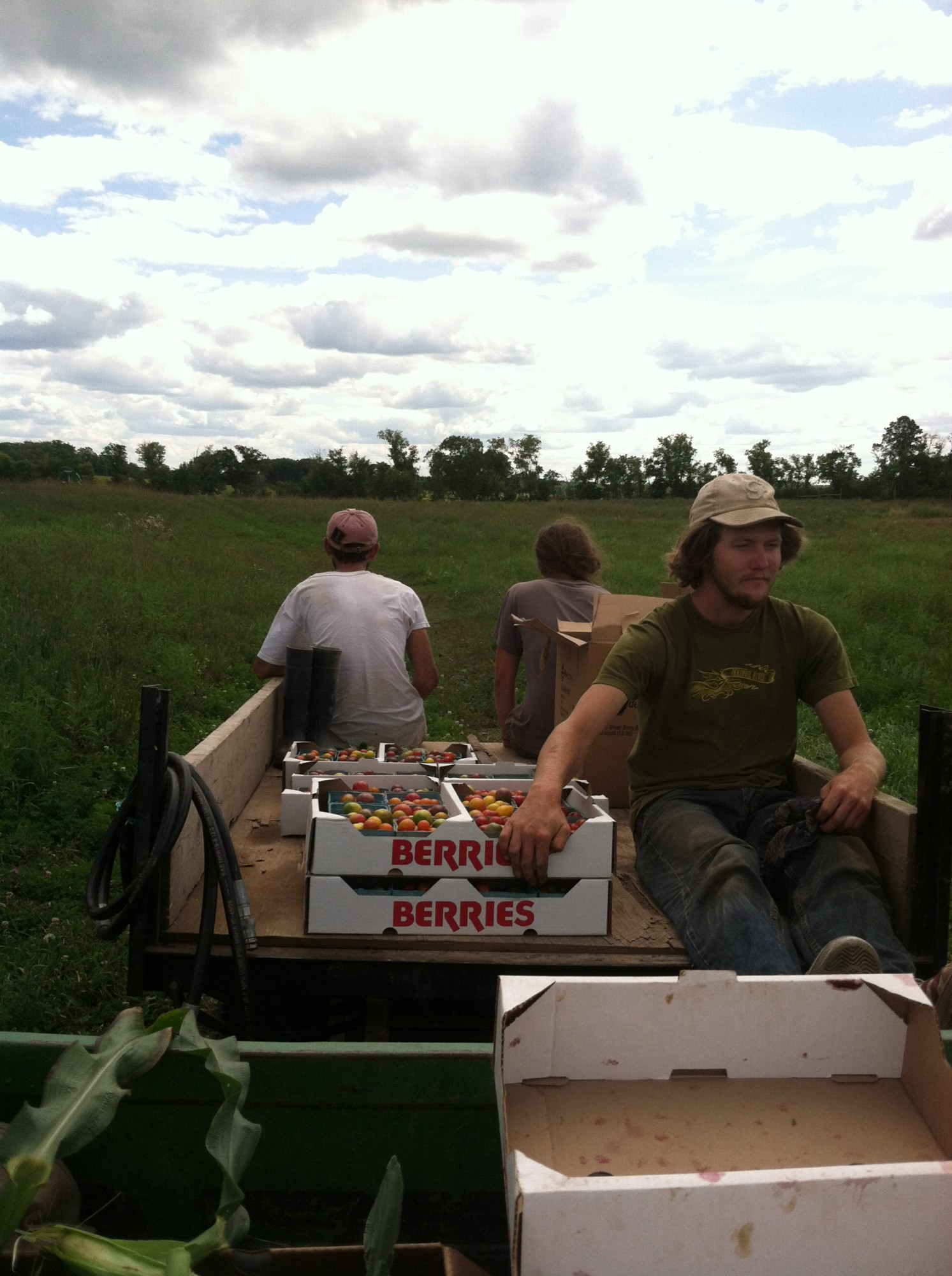 bringing in cherry tomatoes