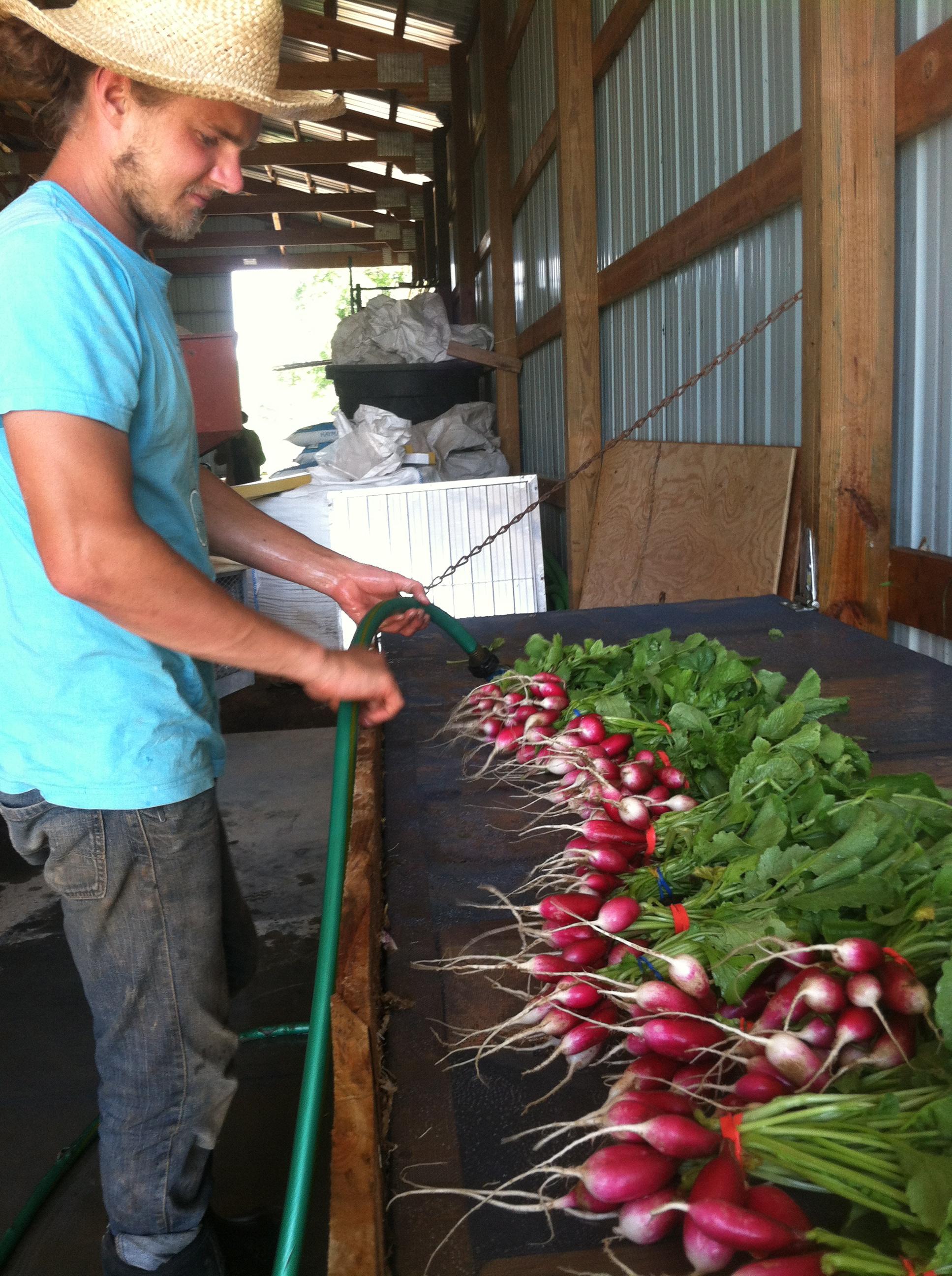 Sam washing radishes