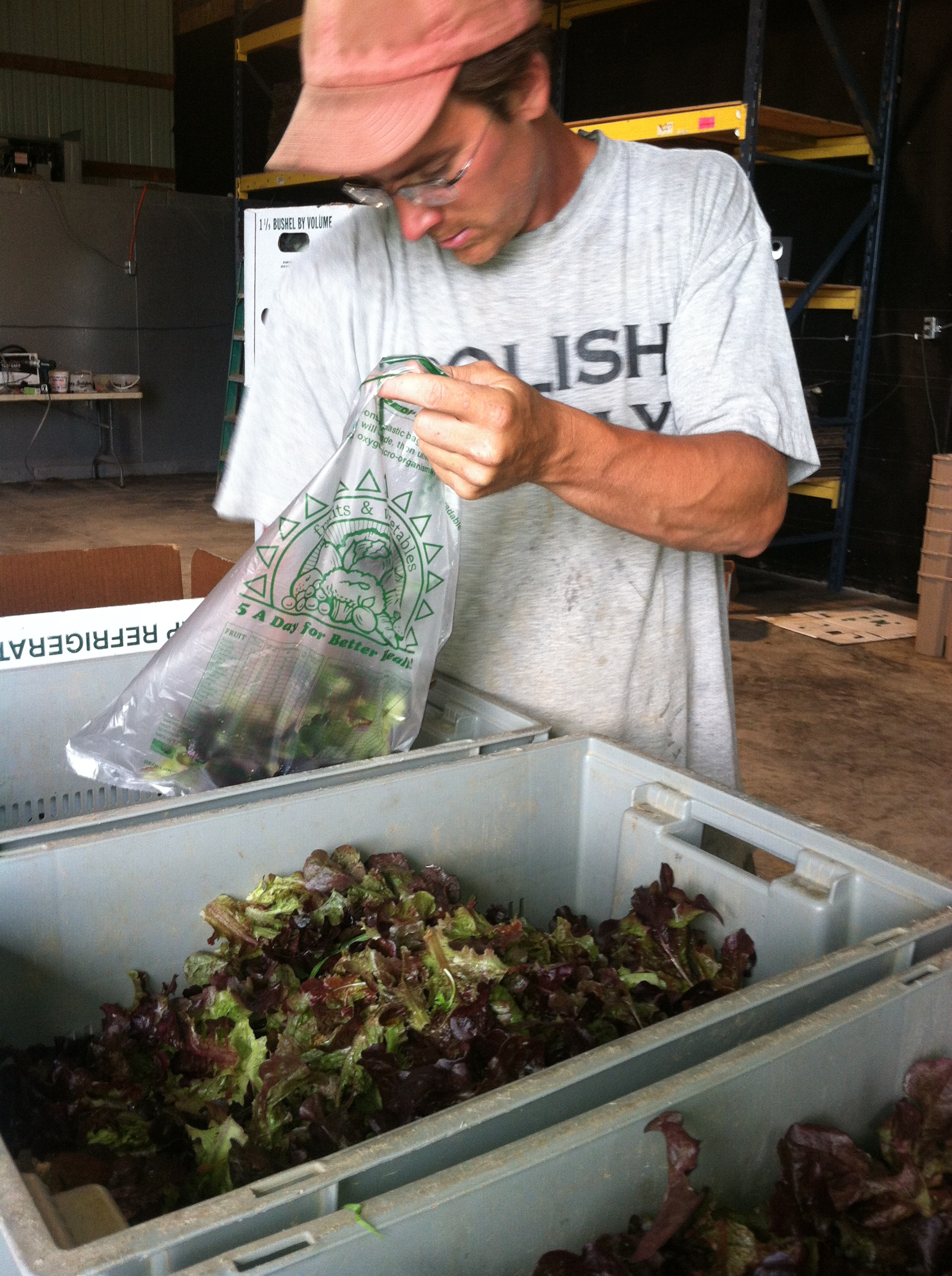Josh bagging lettuce
