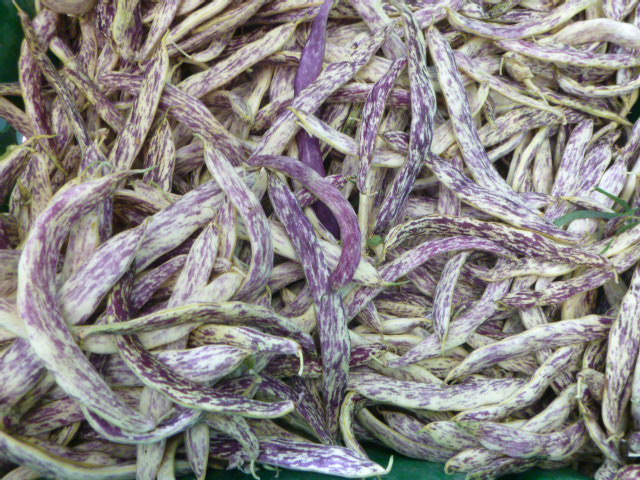 dragon tongue beans, back by popular demand!