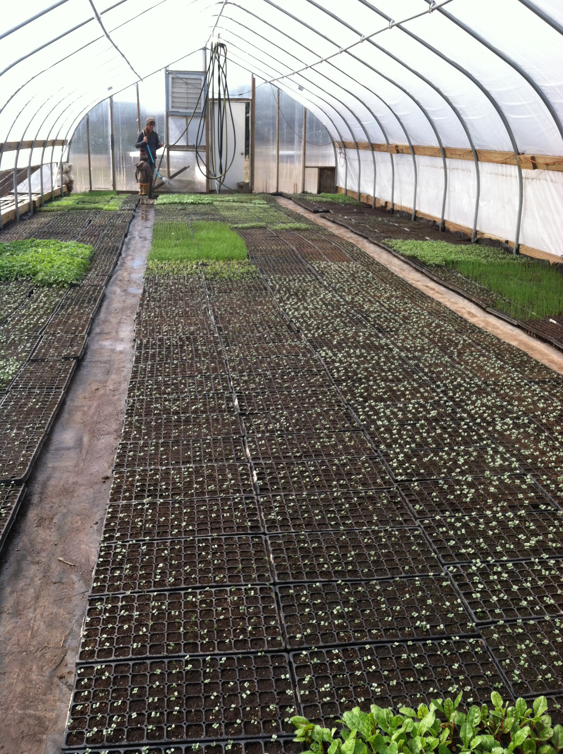 the greenhouse greening up