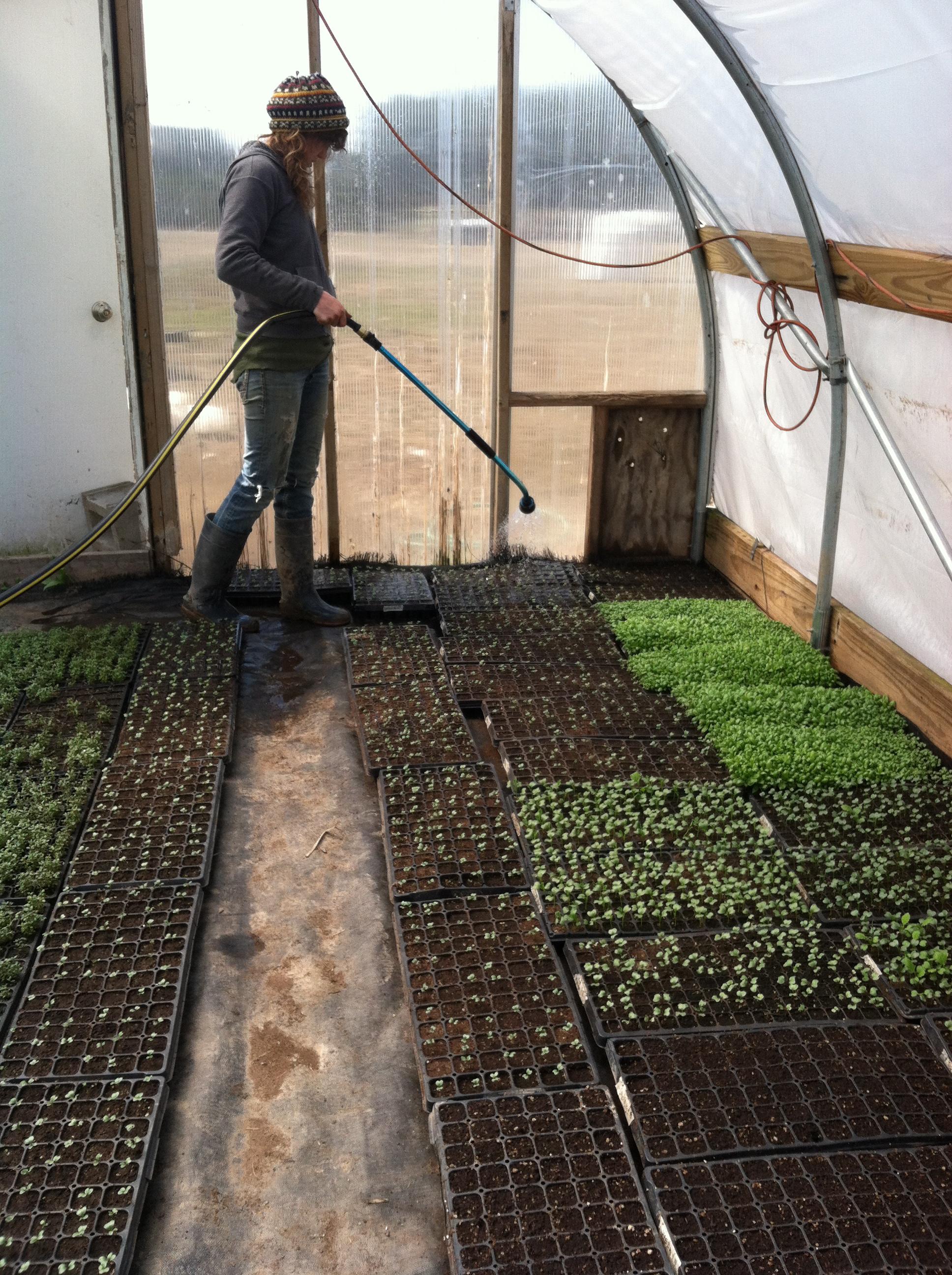 Miranda watering the greenhouse