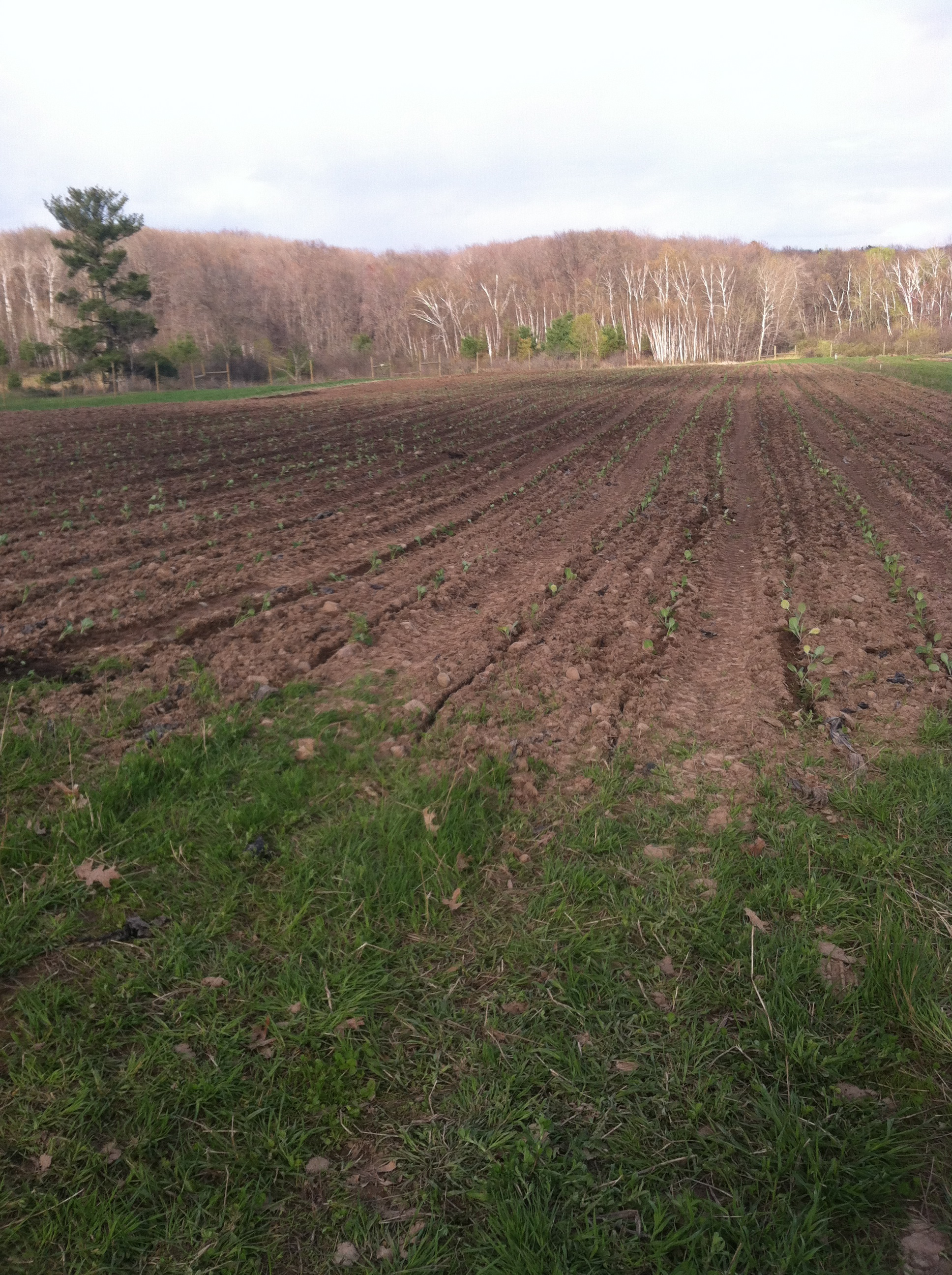 freshly planted fields! grow plants, grow!
