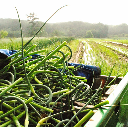 scapes!