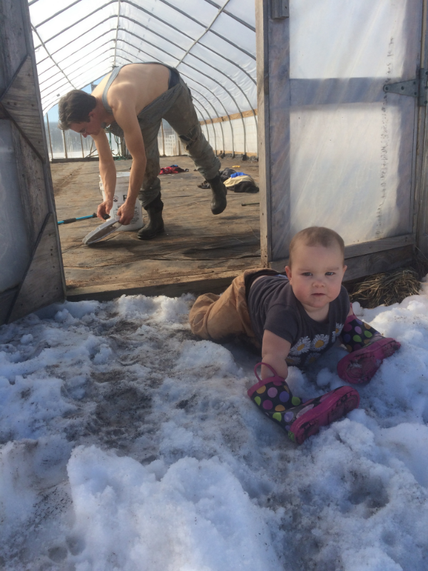 A nice warm day inside the greenhouse for starting up the heating for the seedlings.  Sadie wears boots on her hands so she can crawl in the snow!