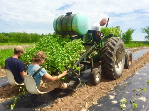 Sam, Dana, and Haley running the water wheel transplanter getting Winter Squash planted.