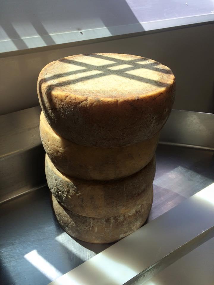 hello beautiful cheese!