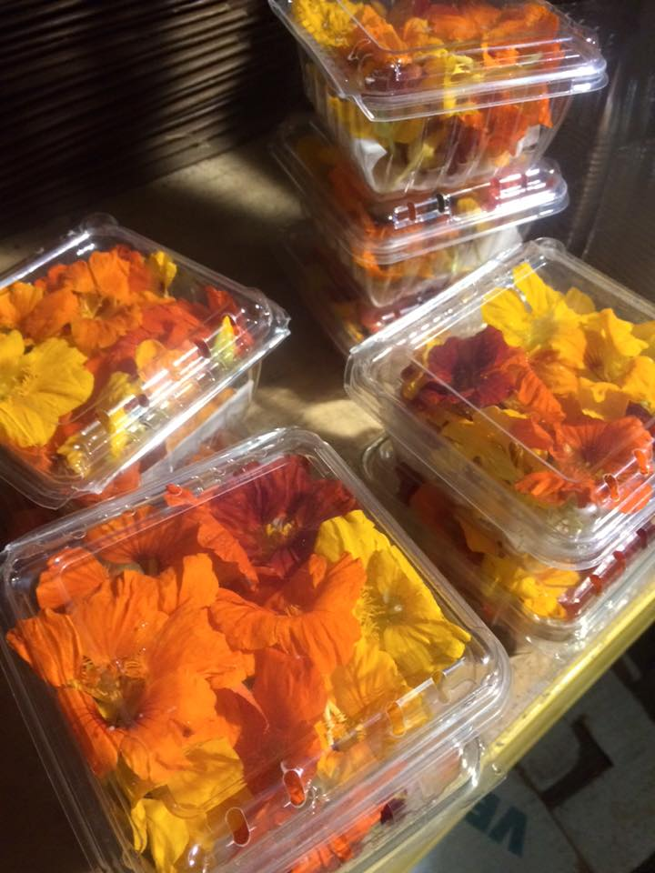 "Nasturtiums for our ""eat like a farmer"" members"