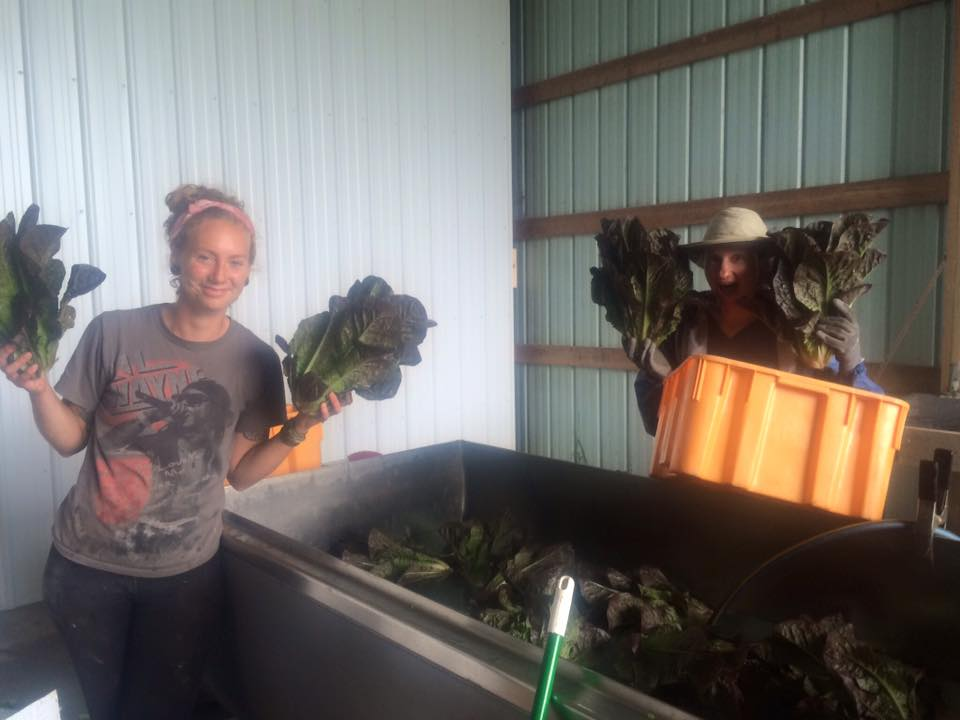 Haley and Aimee and the Red Romaine (feat. Lil Wayne)