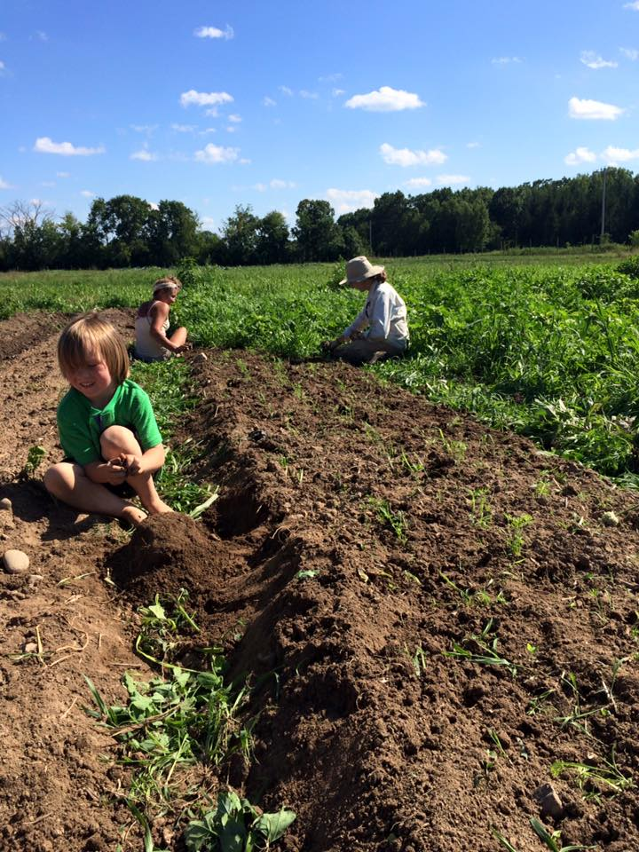 Hannah and Aimee weeding another bed and Otto working on some other project.