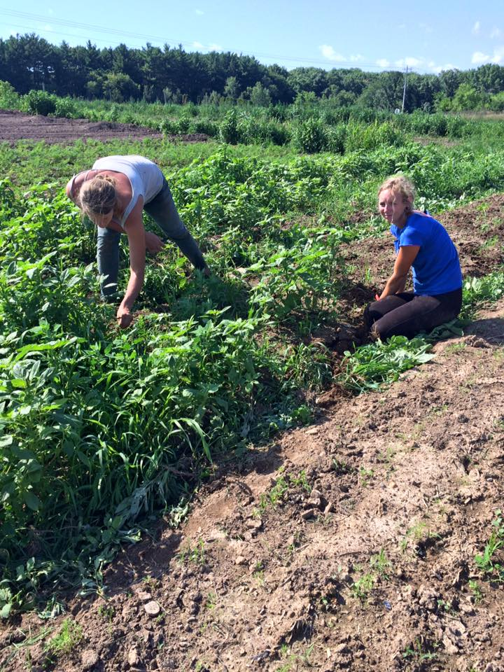 Haley and Anna getting those weeds out of there!