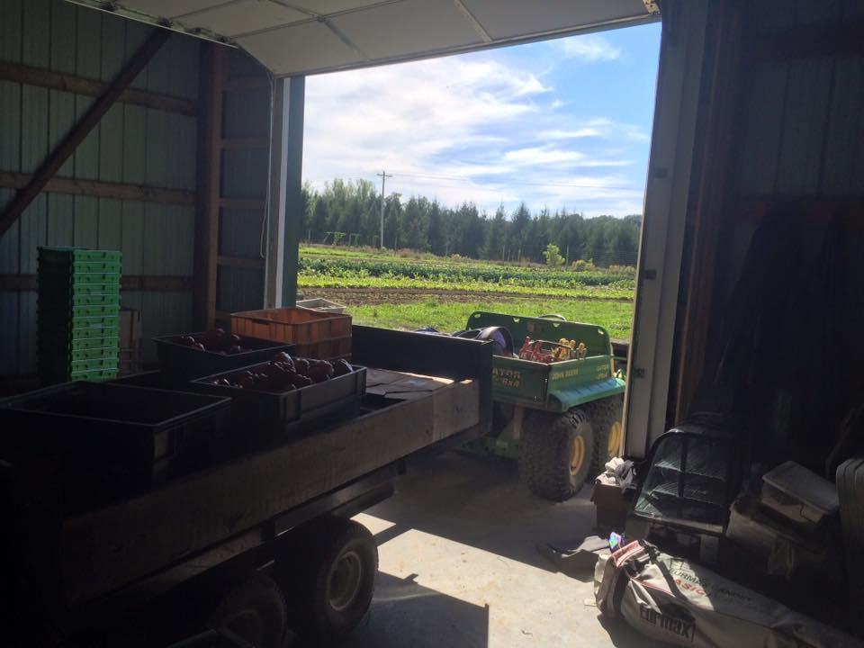 view from the packing shed