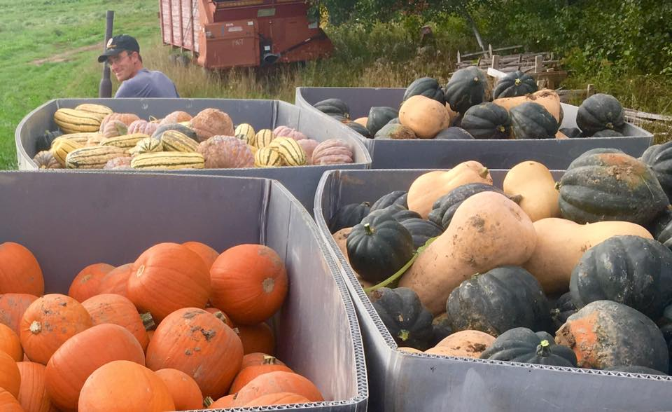 get ready for a lot of squash!