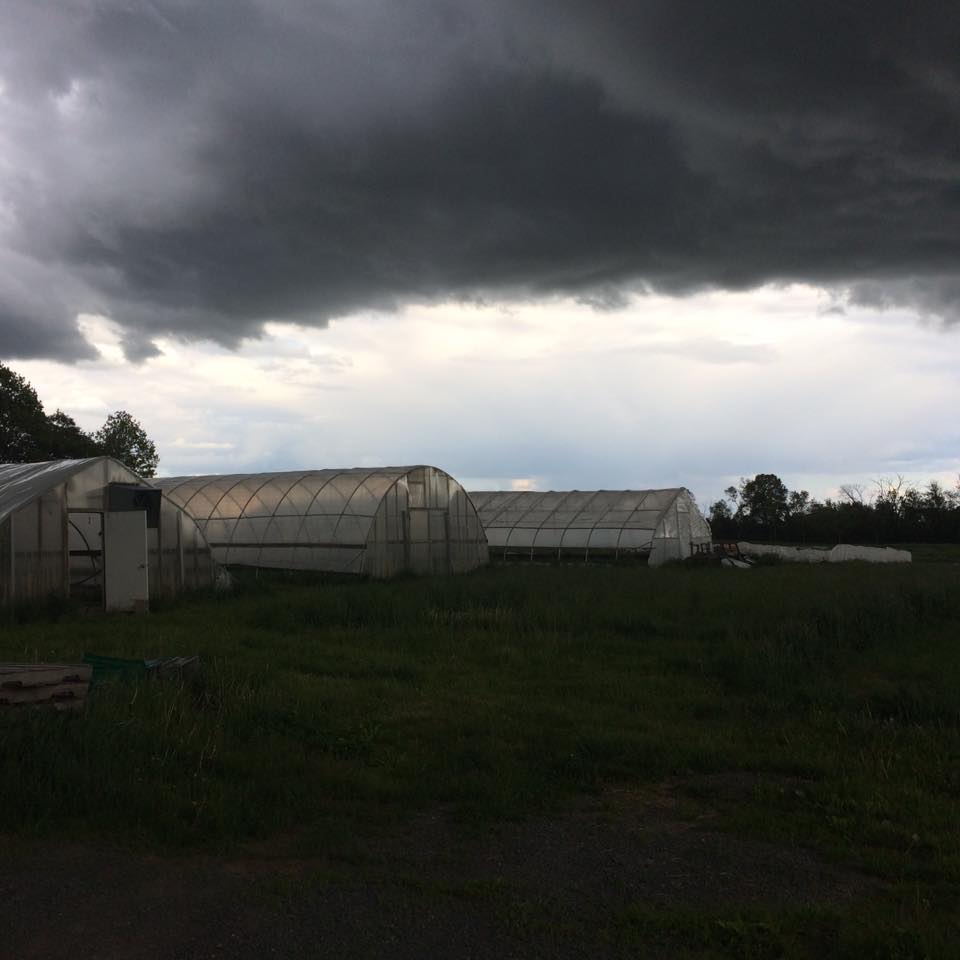 This Spring a big rain cloud parked itself over the farm